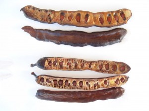 carob pods with seads