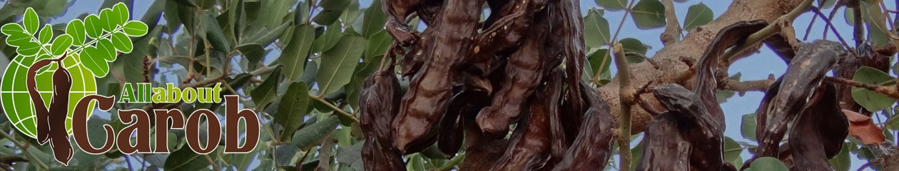 All about Carob